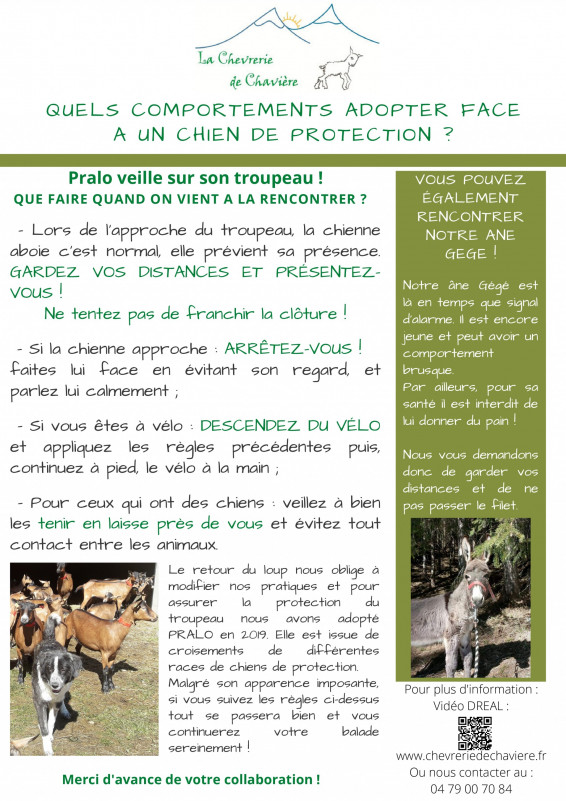 derniere-version-chien-de-protection-2020-06-15-3063
